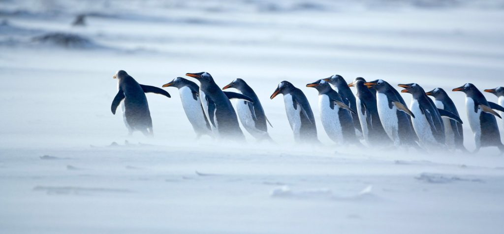 pinguin leadership